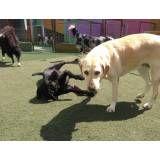 Valor de hoteizinhos de cachorro  no Pacaembu