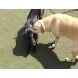 Valor de hoteizinhos de cachorros  no Morumbi