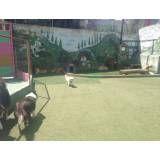 Valor de hoteizinhos de cães no Itaim Bibi