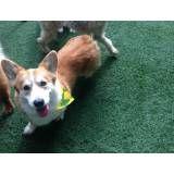 Valor de hoteizinhos de cão em Cajamar