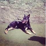 Valor de hoteizinhos para cachorro  em Santo Amaro