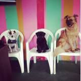 Valor de hoteizinhos para cachorros  em Raposo Tavares