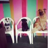 Valor de hoteizinhos para cachorros  no Sacomã