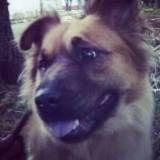 Valor de hoteizinhos para cães  no Jardim Europa