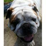 Valor de hotel de cachorros no Socorro