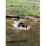Valor de hotel de cães em Taboão da Serra