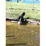 Valor de hotel de cão na Vila Leopoldina