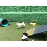 Valor de Hotel para animal em Barueri