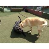 Valor de hotelzinho de cachorro em Santo Amaro