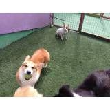 Valor de hotelzinho de cachorros  no Sacomã