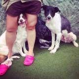 Valor de hotelzinho de cães  na Saúde