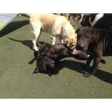 Valor de hotelzinho para cães no Sacomã