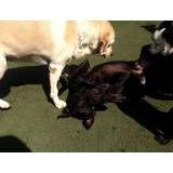 Valor de hotelzinho para cão  em Jandira