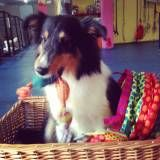 Valores de adestrador para cachorro no Ipiranga