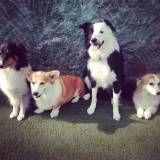 Valores de adestrador para cachorros em Taboão da Serra