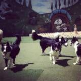 Valores de adestrador para cachorros na Vila Andrade
