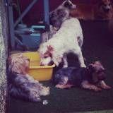 Valores de adestrador para cães em Itapecerica da Serra