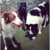 Valores de adestrador para cães na Vila Andrade