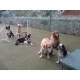 Valores de adestrador para cães no Jockey Club