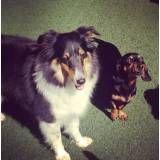 Valores de adestrador para cão em Itapevi