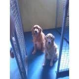 Valores de adestradores de cachorro no Rio Pequeno