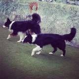Valores de adestradores para cachorro na Vila Sônia