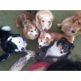Valores de adestradores para cachorro no Rio Pequeno