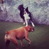 Valores de adestradores para cachorros em Taboão da Serra