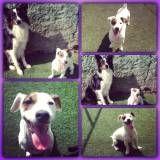 Valores de adestradores para cães em Vargem Grande Paulista