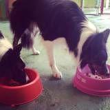 Valores de adestradores para cães no Ibirapuera