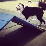 Valores de adestradores para cão em Sumaré