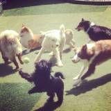 Valores de adestradores para cão na Vila Leopoldina