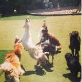 Valores de adestradores para cão no Pacaembu
