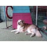 Valores de adestradores para cão no Rio Pequeno