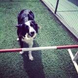 Valores de adestramento de cachorro em Interlagos