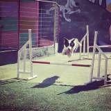 Valores de adestramento de cachorros em Barueri