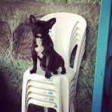 Valores de adestramento para cachorro no Ibirapuera