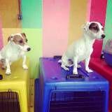 Valores de adestramento para cachorros em Moema