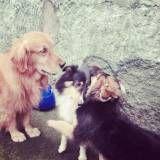 Valores de creche para cachorro no Ibirapuera