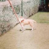 Valores de creche para cachorros no Pacaembu