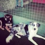 Valores de creche para cão no Ibirapuera