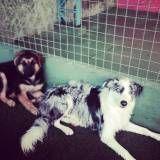 Valores de creche para cão no Jaguaré