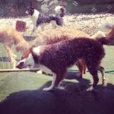 Valores de creches de cão  em Itapecerica da Serra