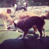 Valores de creches de cão  na Pedreira