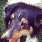 Valores de creches para cachorro no Jaguaré