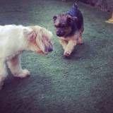 Valores de creches para cachorros no Jardim Paulistano