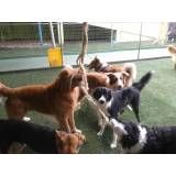 Valores de Daycare canino na Saúde