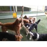 Valores de Daycare canino no Campo Limpo