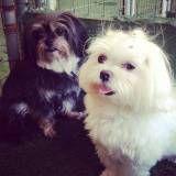 Valores de Daycare de cachorro na Pedreira