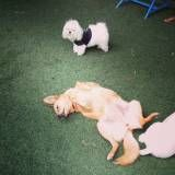 Valores de Daycare de cachorros no Sacomã